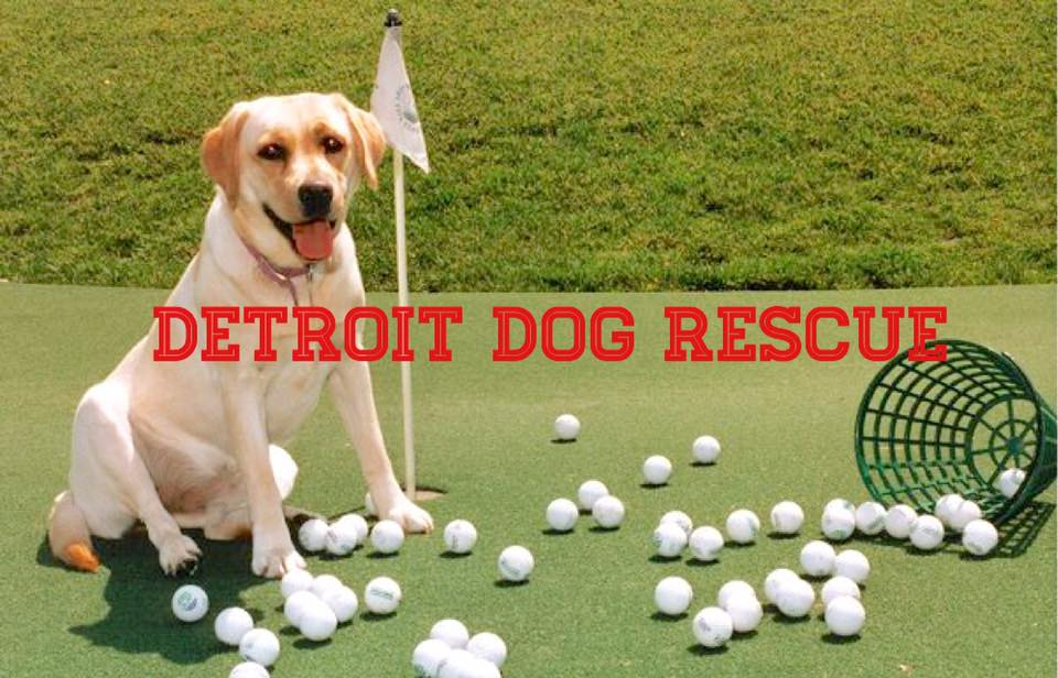 Win A FREE Golf Foursome – The Rounds 'Fore' Rescues Golf Classic