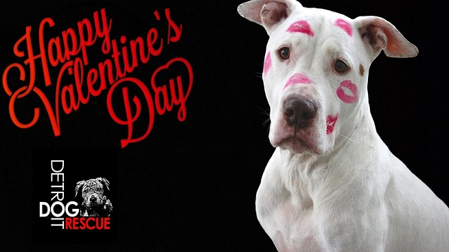 Valentines Day…Doggy Style with Detroit Dog Rescue