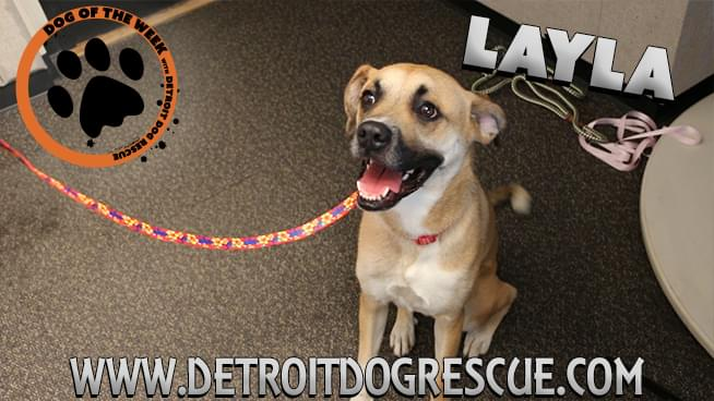 Lauren's Dog of the Week from Detroit Dog Rescue