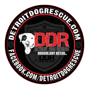 Dog of the Week with Detroit Dog Rescue