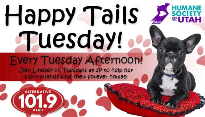 Happy Tails Tuesday