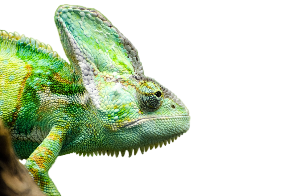 Man Assaults With Iguana & Actor Who Plays Jesus Caught Selling Drugs