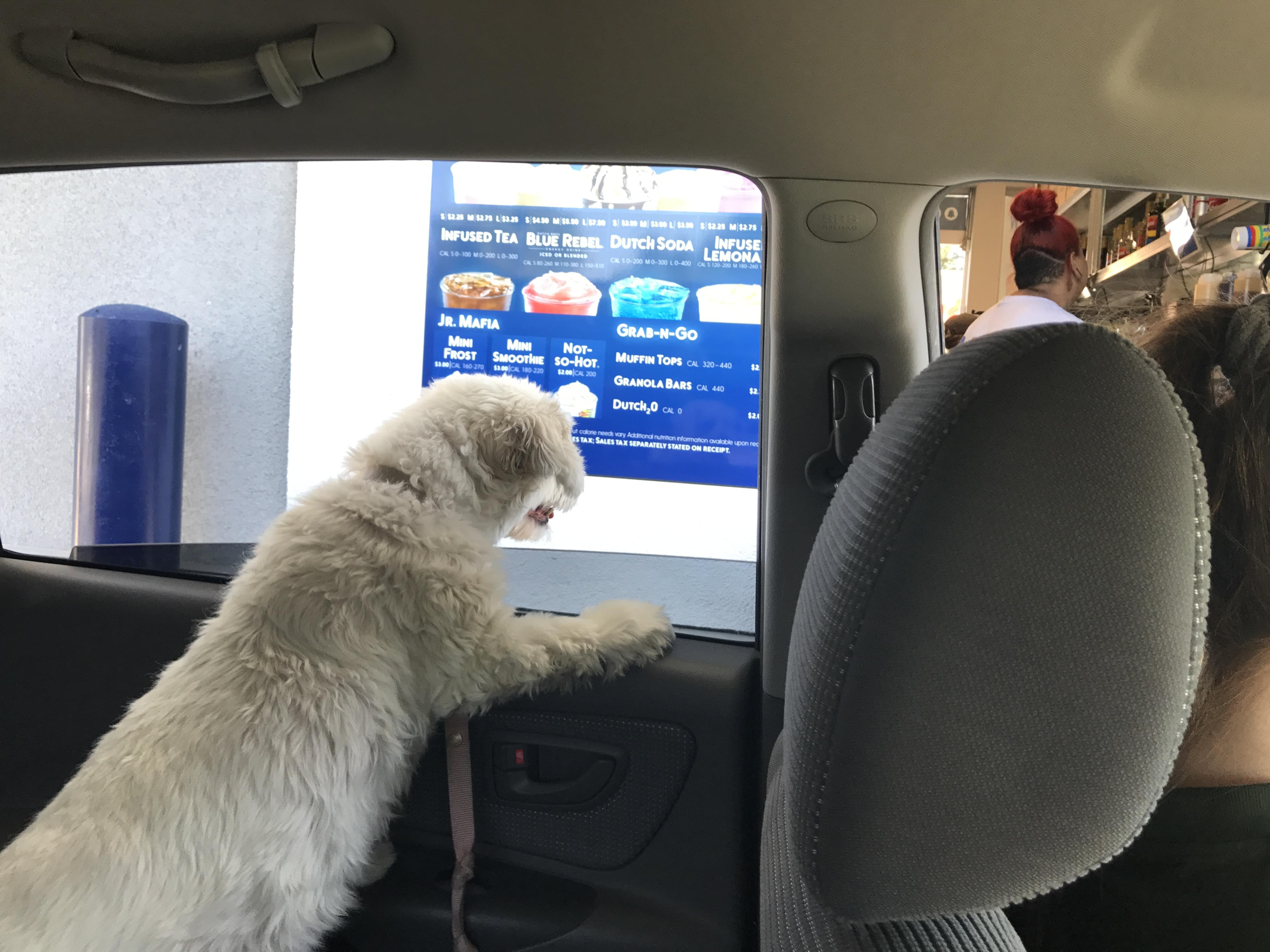Dutch Bros Is Cornering The Dog Owner Market!