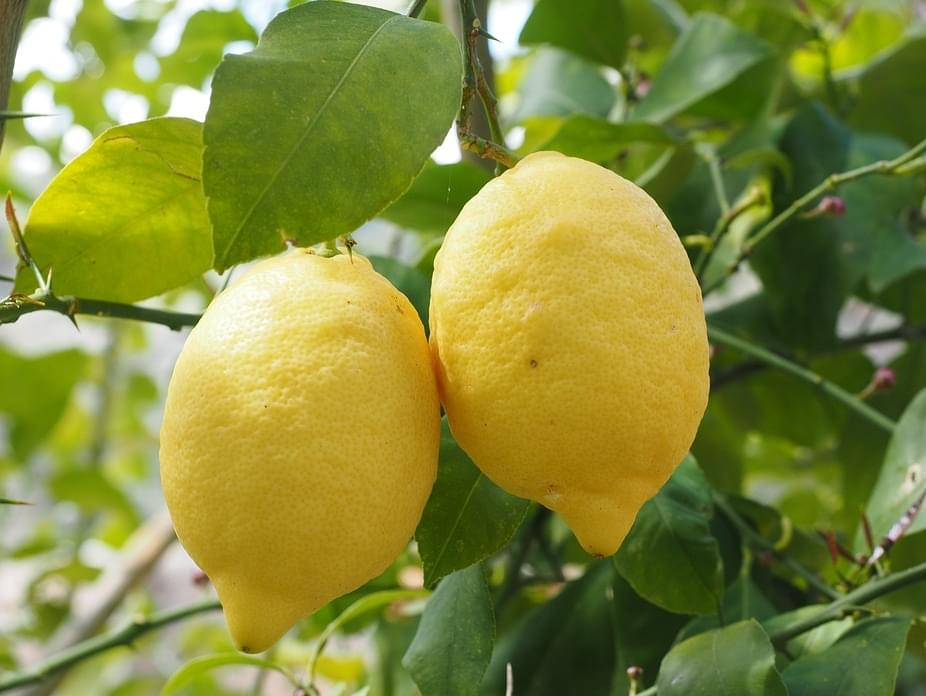 When Life Gives You Lemons…Steal Them
