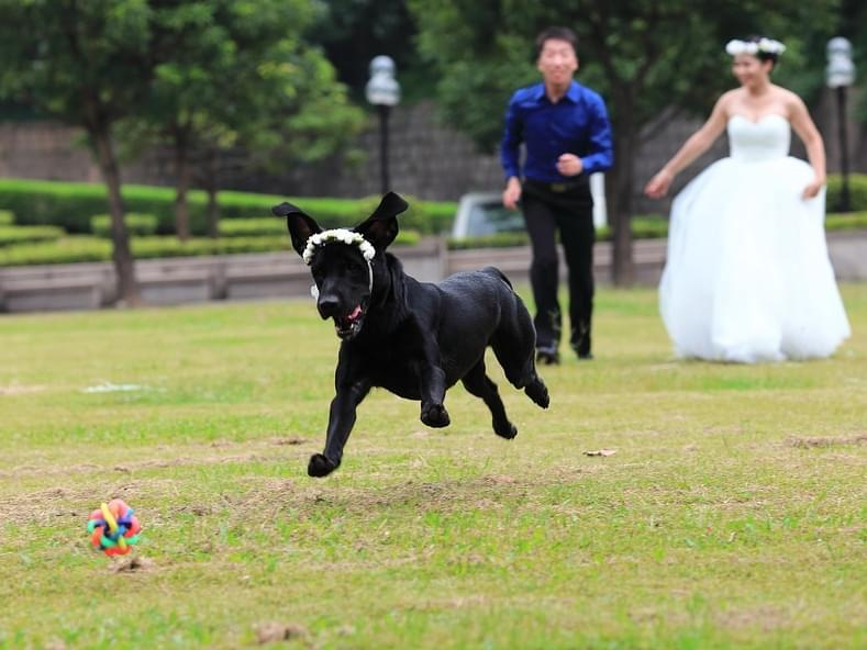 Should Pets Be At Weddings?
