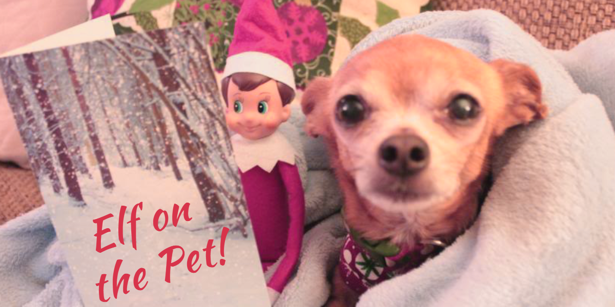 Elf on the Pet!