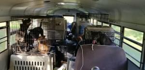 Man Rescues More Than 50 Dogs From Hurricane Florence Floods In School Bus