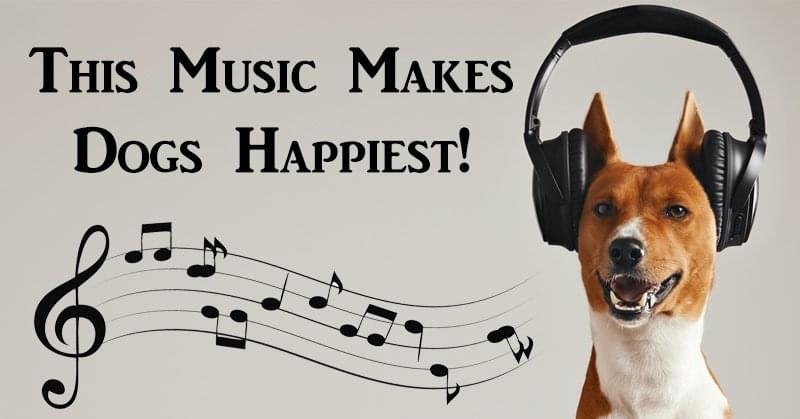 Dogs are the happiest when they listen to reggae music
