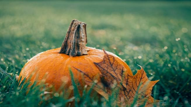 Five Perfect Points To Pick The Perfect Pumpkin
