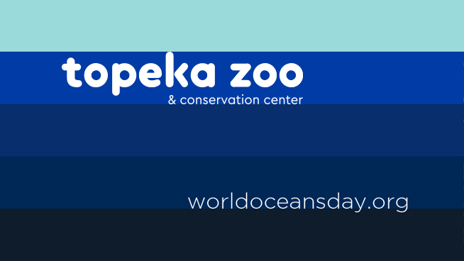Celebrate World Oceans Day With The Topeka Zoo