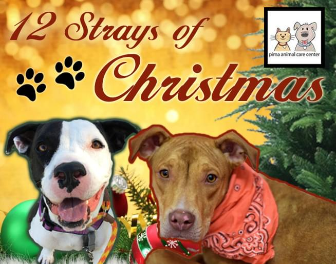 12 Strays of Christmas with PACC