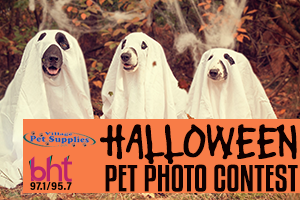 Halloween Pet Photo Contest