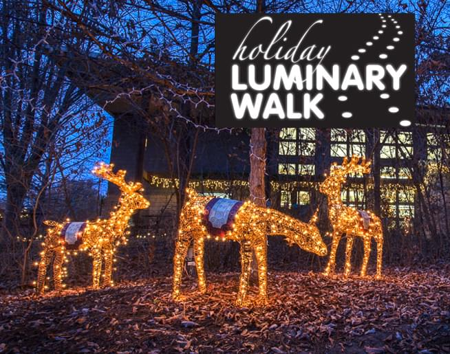 Holiday Luminary Walk at the Botanical Gardens