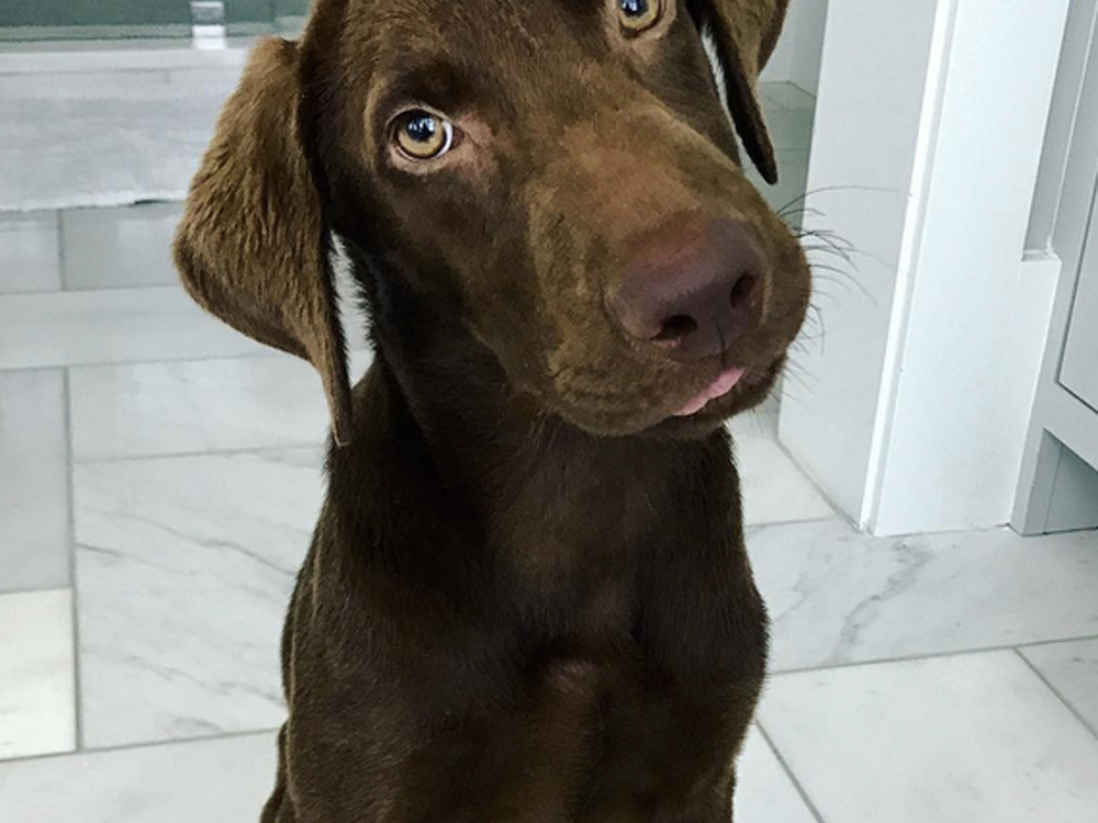 """""""Choc"""" the Lab and His New Family Will Soon Be """"Huntin', Fishin' & Lovin' Every Day"""""""
