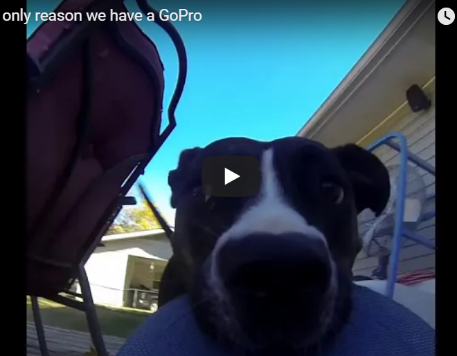 WATCH: This Video Of A Dog Stealing A GoPro Will Make Your Day