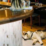 Barks and Beers: Take Your Canine Companion to These Dog-Friendly Bay Area Bars