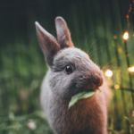 Easter Around the Bay: Egg Hunts, Parades, and More!