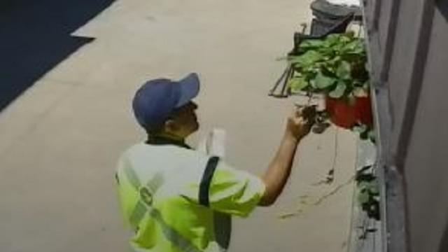 Hungry Mailman Eats Free Fruit