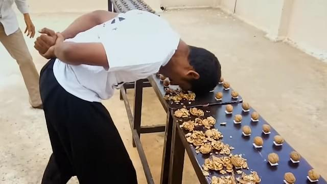 World Record Walnut Cracker