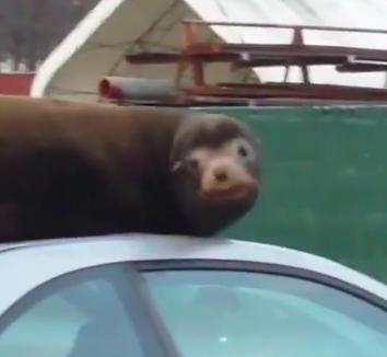 Three Viral Animal Videos That You Missed!