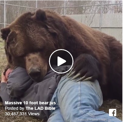Enormous Bear Just Wants To Snuggle…