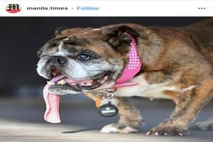The World's Ugliest Dog Title Goes To … Zsa Zsa!