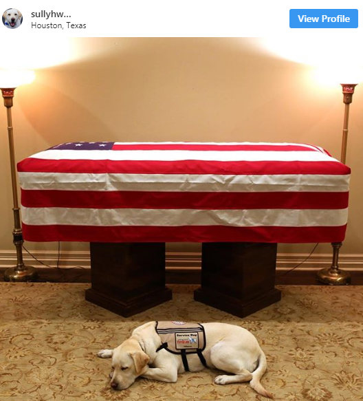 George H.W. Bush's Service Dog Sully Has Not Moved From His Side