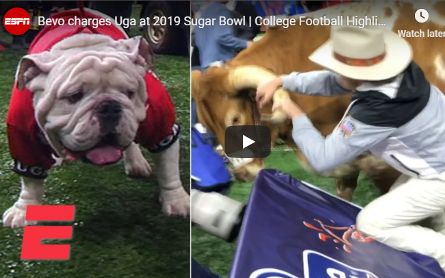 WATCH: Uga the Bulldog Run for his Life!