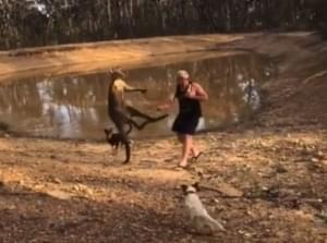 VIDEO: Australian Man Fights Kangaroo, But Saves His Beer
