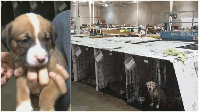 Hundreds of animals evacuated to emergency shelter in Roswell
