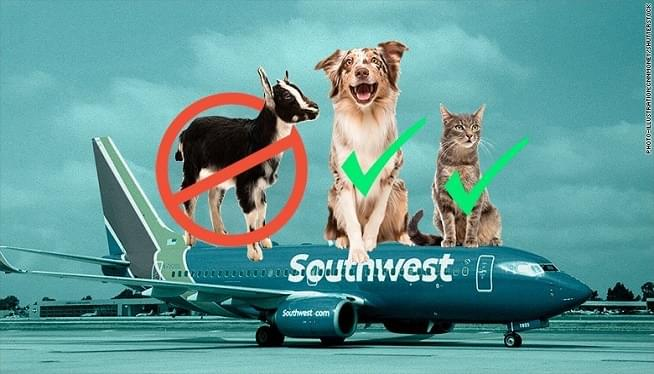 Southwest: Only Cats And Dogs Allowed As Emotional Support Animals