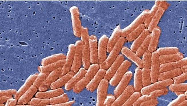 Drug-Resistant Salmonella From Chicken Sickens Nearly 100