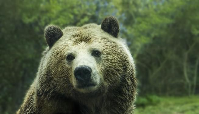 Woman And Young Daughter Killed In Apparent Grizzly Bear Attack