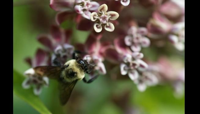 EPA Restores Broad Use Of Pesticide Opposed By Beekeepers