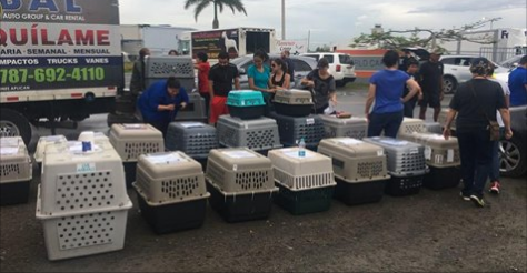 100 Dogs Land At Dulles Airport, Rescued From Puerto Rico