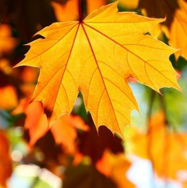 2018-11-05 12_23_02-leaf collection - Google Search