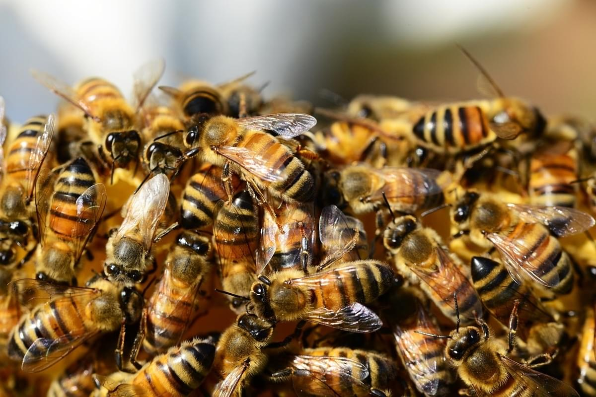 YIKES – 20 Thousand Bees Swarm Times Square