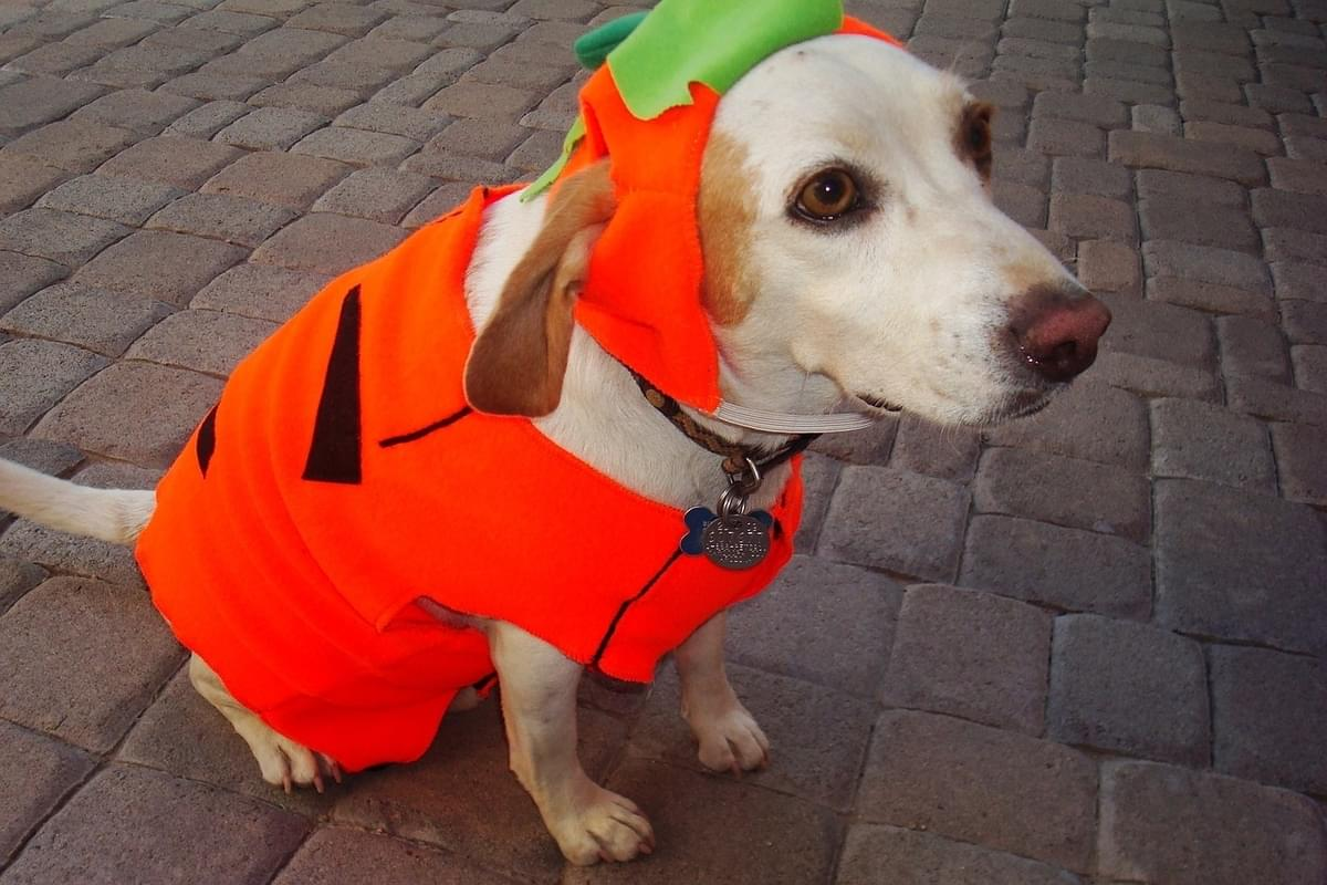 A Halloween Dog Parade is Coming NYC