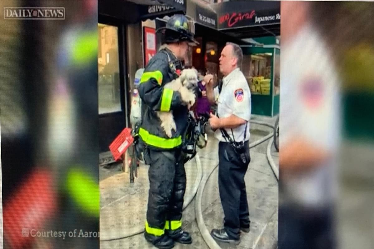 All The Feels: Firefighters Rescue 46 Dogs & 2 Cats in NYC kennel Fire