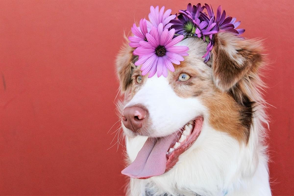 Doggy Museum Opens In NYC