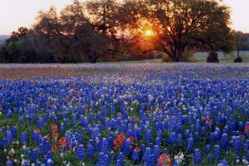 """Experts Say Wildflower Season Is """"Spectacular"""""""