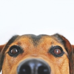 Safety Tips for Pet Owners this Thanksgiving
