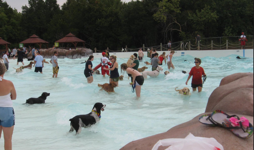 Pools and Water Parks Open for Dogs: Updated List – More ...