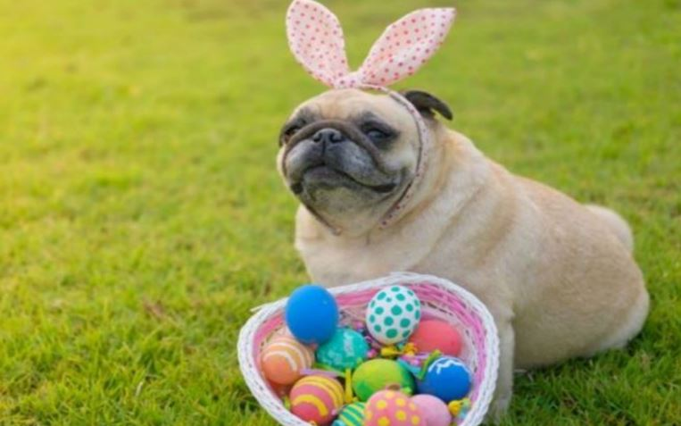 Image result for easter dogs