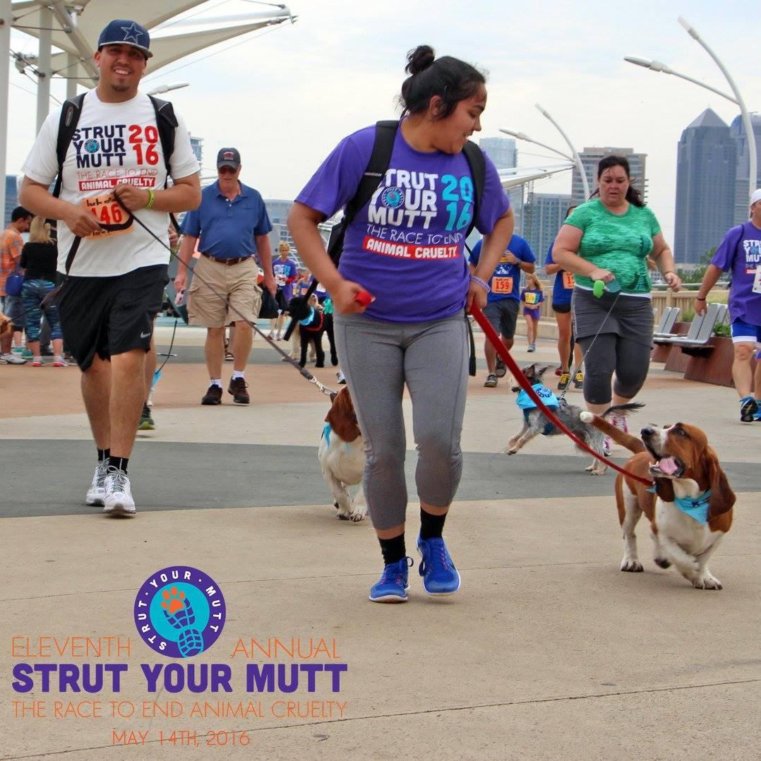 Strut Your Mutt to End Animal Cruelty!