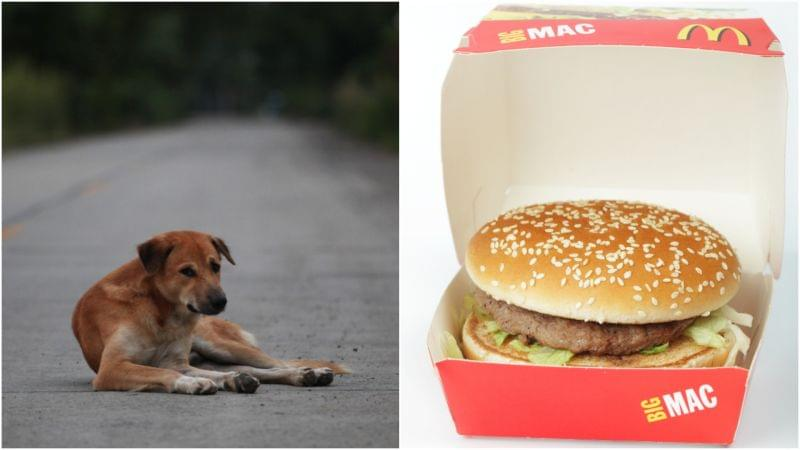 Gold digging' dog pretends to be a stray in order to get hamburgers – Daily News