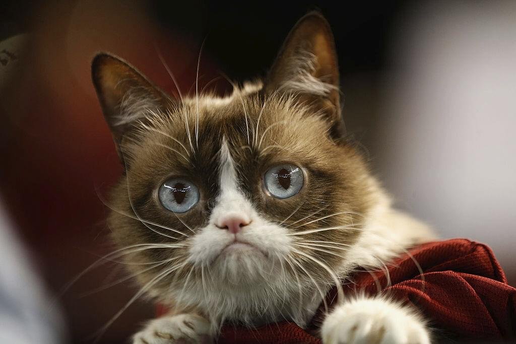 What You DIDN'T Know About Grumpy Cat!