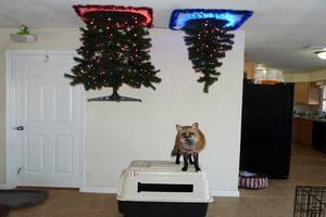 Pet Proof Christmas Trees