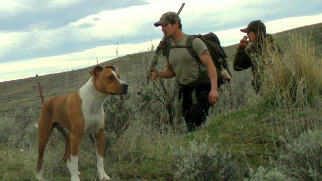 Fish and game still looking for poaching suspects kboi am for Idaho dept of fish and game