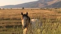 BLM to Release Wild Horses Into Area Scorched in 2015 Soda Fire